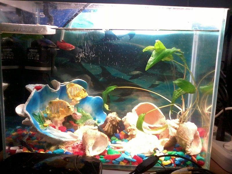 2013-12-20_fish